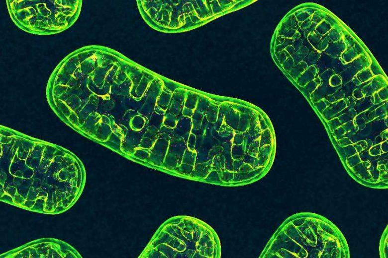 Ora riusciamo a modificare anche il DNA dei mitocondri